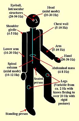 Natural Frequency Of Human Body