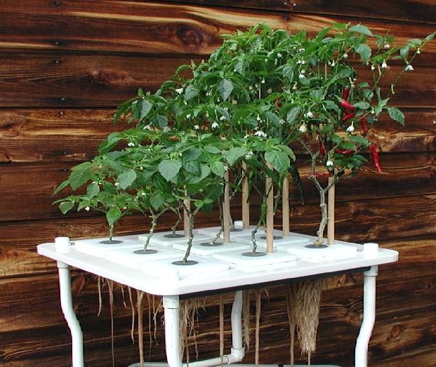 123 for Indoor gardening pdf