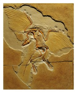 K selected go extinct, archaeopteryx
